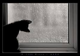 cat in window with rain